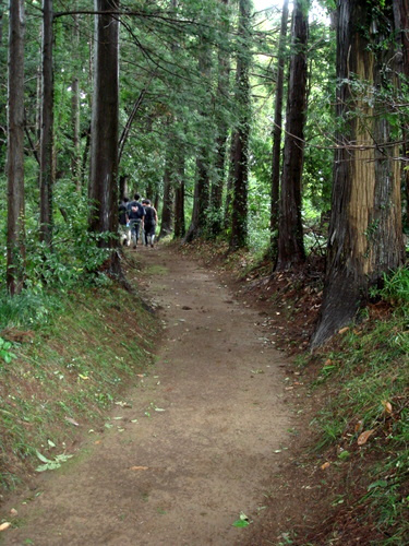 大宮神社への道